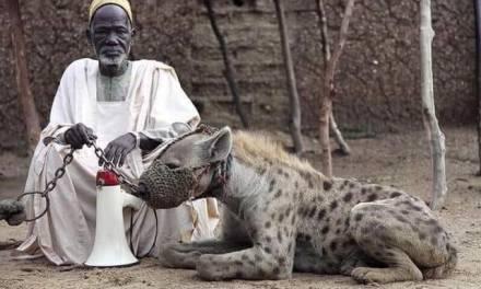 Il re, il servo e i cani
