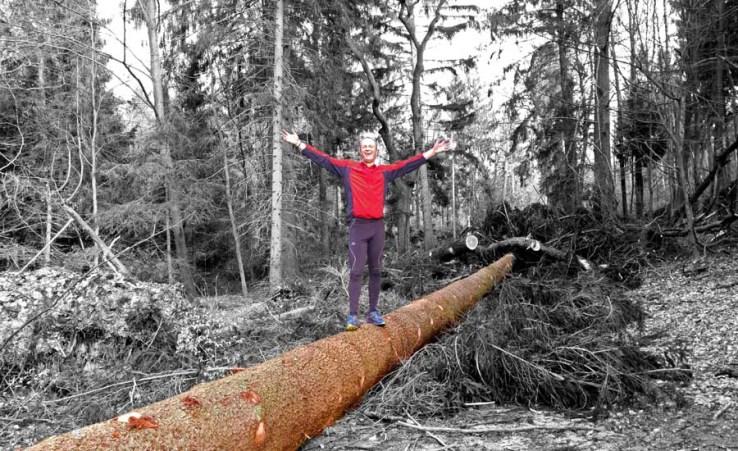 Umgestürzte Bäume am Donoper Teich