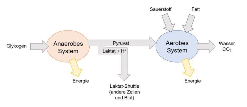 Grafik 1: Das Wechselspiel von anaerober und aerober Energiebereitstellung