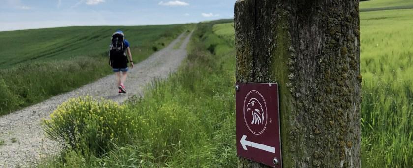 Auf dem Habichtswaldsteig folgt man stets den purpurnen Habicht-Schildern