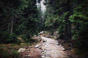 trail-690619