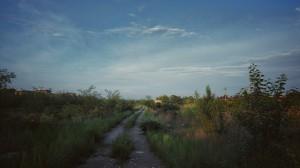 path-867224