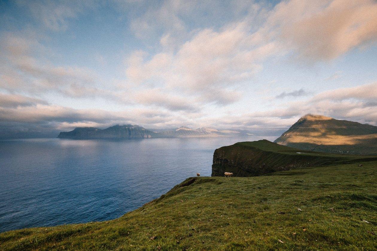 Får på Færøerne