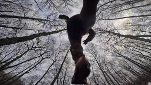 Sonntags im Wald mit der Gopro