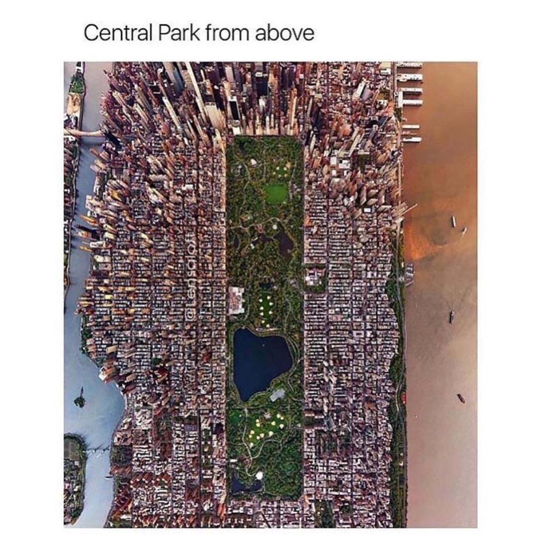 Central Park Karen Memes Gifs Imgflip