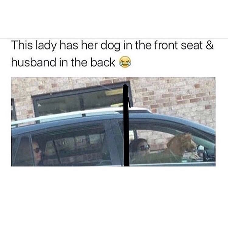 After Hitting A Dog With His Car A Canadian Man Drove It To