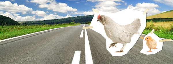 why did the chicken cross the road the best place for clean jokes