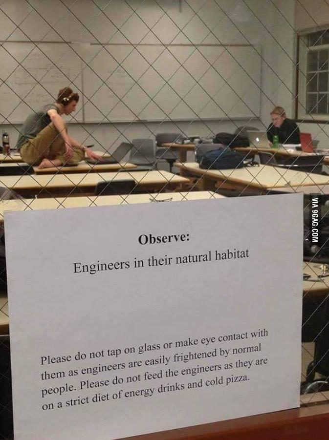 Engineers in their natural habitat