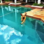 This dog can walk on water