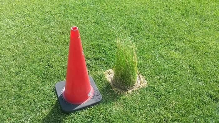 Amazing that the grass grew inside the orange cone