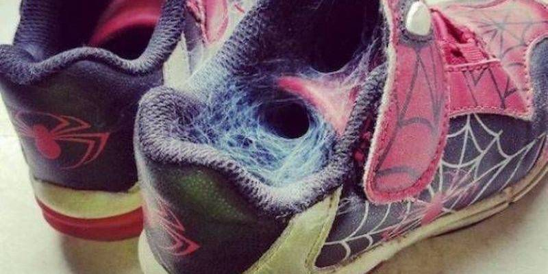 Spider web in a pair of spider shoes