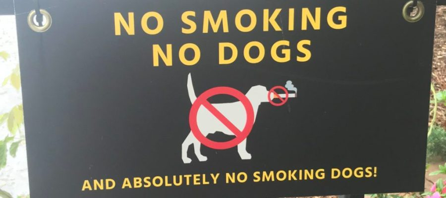 No Smoking Dogs