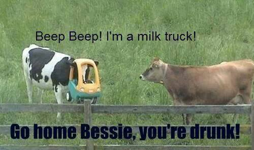 Go home, cow! You are drunk