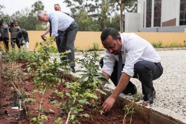 Ethiopia creates new record by planting 35 cr trees in a day to challenge climate change