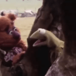 Kermit the Frog & Fozzie Bear Hilariously Engage In Improvised Existential Banter In 1979 Camera Test