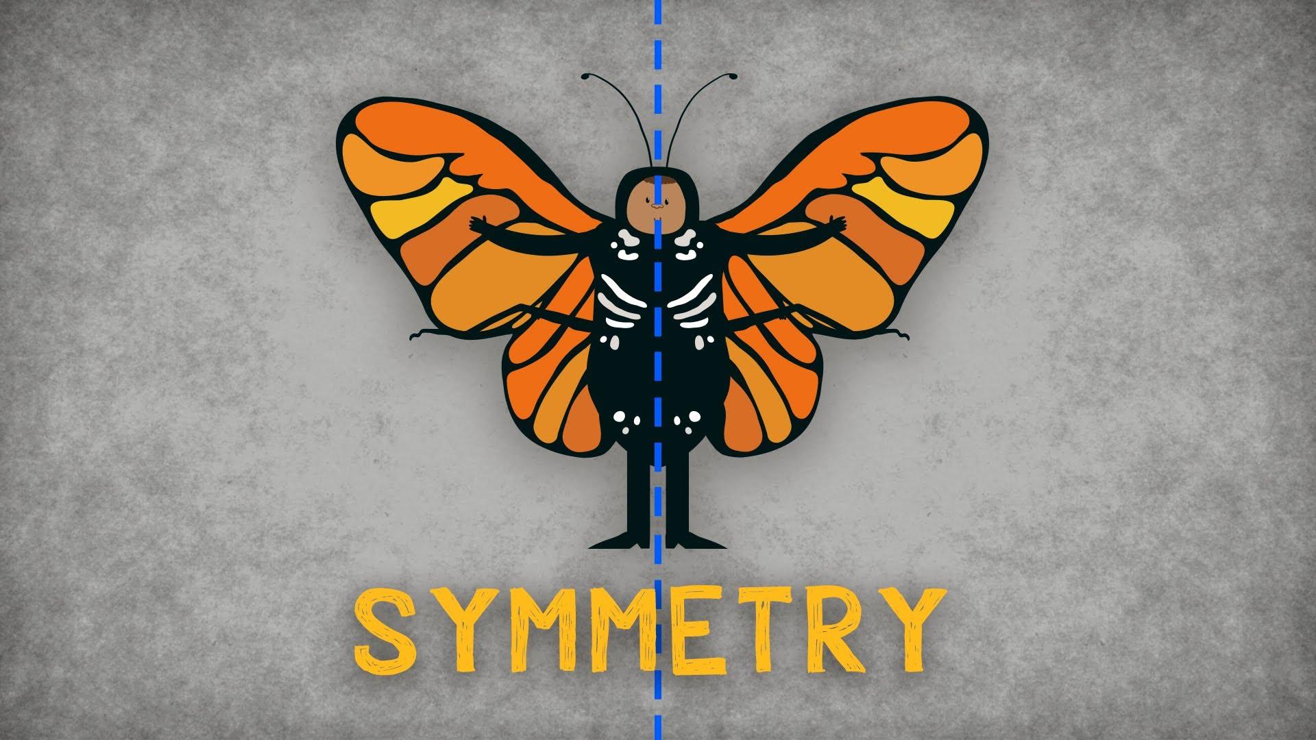 Ted Ed Animation Explaining The Importance Of Symmetry
