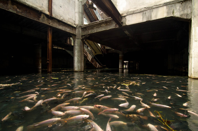 Flooded Bangkok Shopping Mall Is Full of Fish