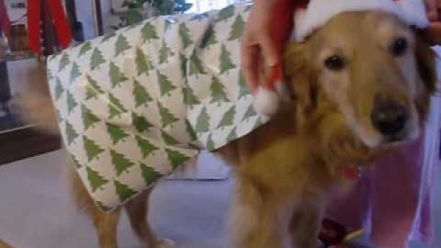 how to gift wrap a dog for christmas - How To Wrap A Cat For Christmas