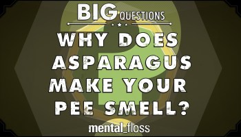 MinuteEarth Tackles the Mystery of Asparagus Pee