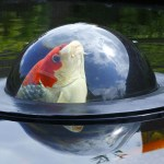 A Floating Dome That Lets Fish Swim Above the Surface of the Water to Get a View of the World