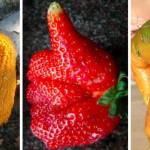 Imperfect Produce, A Subscription Service That Delivers 'Ugly' Fruits and Vegetables by the Pound
