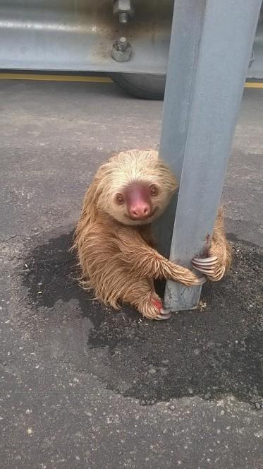 Close Up Sloth