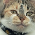 Swedish Scientists Study How Cats Respond to the Way Humans Communicate With Them