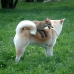 A Quick Brown Fox Literally Jumps Over a Lazy Dog