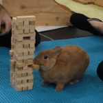 A Confident Little Bunny Skillfully Removes a Jenga Block From the Tower Without Toppling it Over