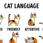 An Adorably Animated Comprehensive Guide to Understanding What a Cat is Trying to Communicate