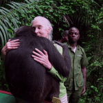 Grateful Chimpanzee Doubles Back to Give Jane Goodall a Big Hug After Being Released Into the Wild