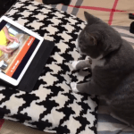 A Studious Cat Quickly Learns How to Make Biscuits by Watching a Dough Kneading Tutorial Video