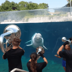 Teenage Brass Ensemble Performs for a Very Appreciative Beluga Whale at the Mystic Aquarium