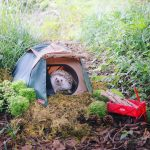 A Teeny Tiny Hedgehog Camps Out Under the Great Big Sky With Teeny Tiny Custom Camping Gear