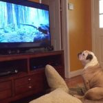Bulldog Tries to Save Leonardo DiCaprio From a Bear Attack While Watching 'The Revenant'