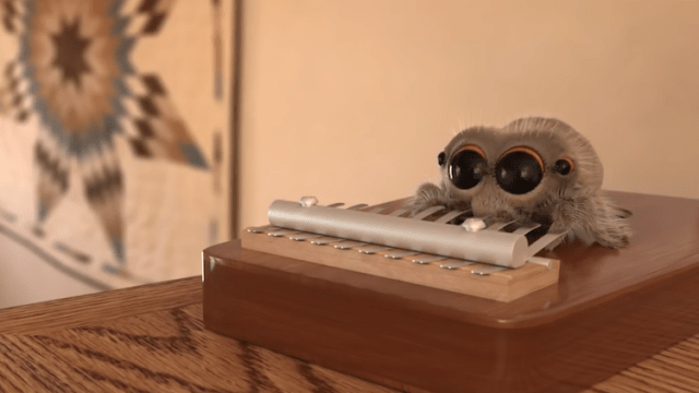 An Adorable Animated Short About A Cute Little Spider Named Lucas