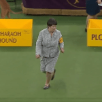 Dogs of the Westminster Dog Show Are Edited Out to Hilariously Focus on the Humans Leading Them