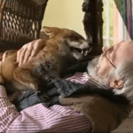 A Day In the Life of a Rescued Fox Named Jack