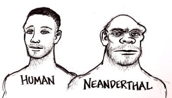 An Animated Timeline of Human Evolution Over Seven Million