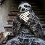 An Incredibly Realistic Three-Toed Sloth Costume