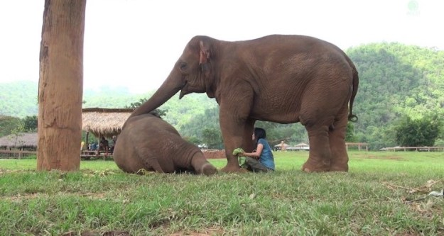 baby-elephant-lullaby Insistent Elephant Urges Her Caretaker Away From Visitors to Come Sing a Lullaby to a Baby Elephant Random