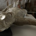 Determined Team of Archeologists Reconstruct the Face of a Soldier Who Died in Ancient Pompeii