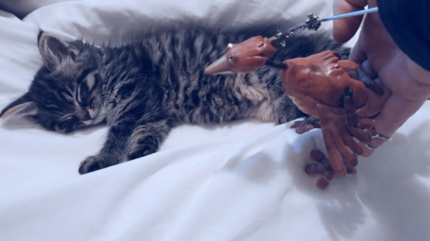 Dabchick-Matilda Dabchick the Bird Puppet Welcomes Matilda the Kitten Into the Dixon Home With a Tenderly Humorous Song Random