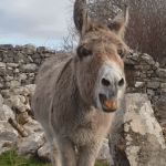 A Friendly Donkey Sweetly Serenades Humans Who Pass By In a Gorgeous Operatic Soprano Voice