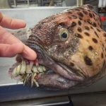 Russian Fisherman Shares More Fascinating Photos of the Unusual Deep Sea Creatures He's Found at Work