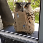 A Helpful Owl Politely Waits at the Window to Deliver a Letter to the Human Inside the House