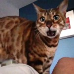 Man Hilariously Autotunes His Cat's Persistent Meow