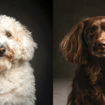 National Geographic Wildlife Photographer Documents Domestic Dogs in His Book 'The Year of the Dogs'