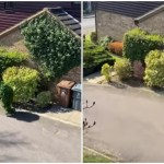 Neighbor Sneaks Out of His House Dressed Like a Leafy Bush During UK Coronavirus Lockdown