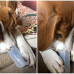 Musical Puppy Plays Jaunty Tunes on a Nose Flute